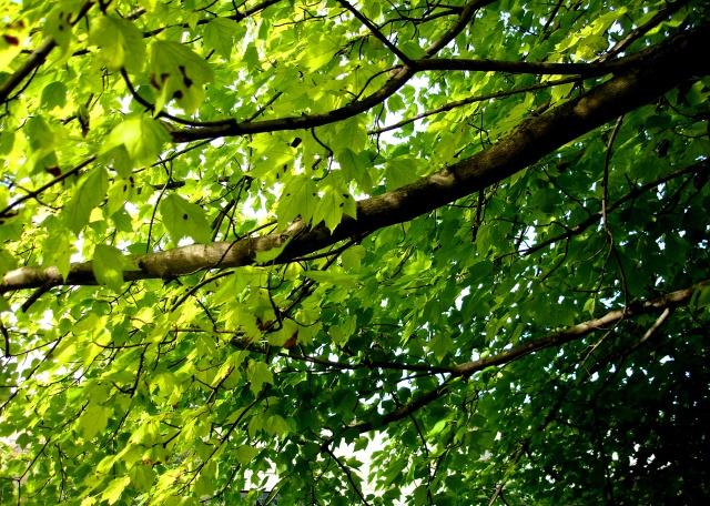 leaves3
